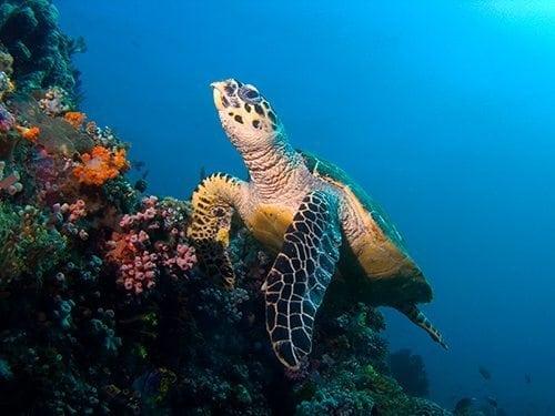 Sea Turtle Searunner Speedboat Phuket