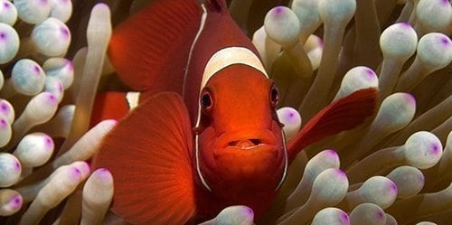 Clownfish Diving Mobile Searunnerspeedboat
